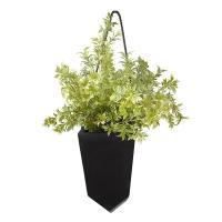 Verdure dans pot suspendu noir 16 x 25''