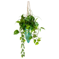 Cascading Greenery in Hanging Planter, 30x18''