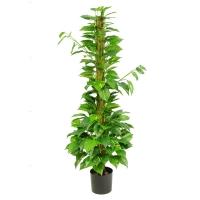 Plante artificielle, vignes sur branche de cocotier 53'' x 1