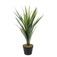 Potted Yucca, 30''