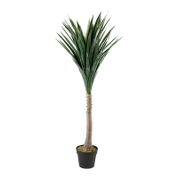 Potted Yucca, 50''