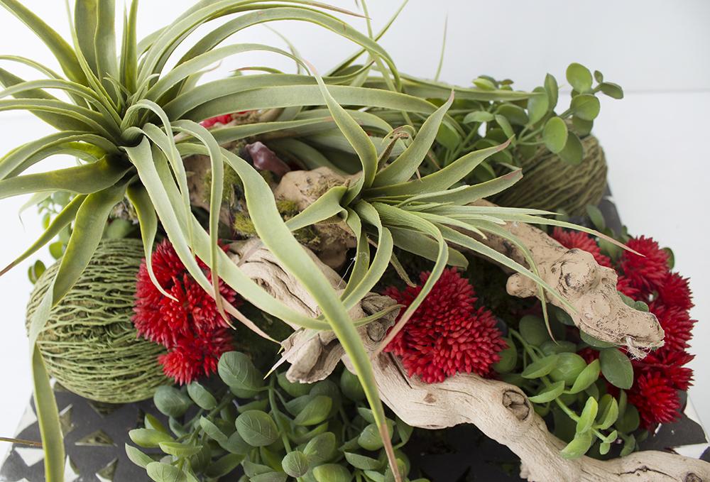 Centre de table bois fleurs et plantes grasses d cors v ronneau - Code avantage plantes et jardins ...