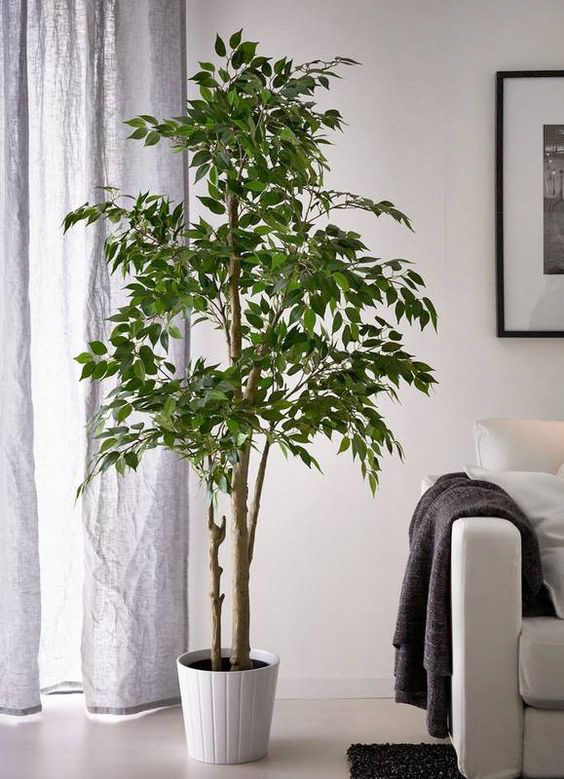 Artificial ficus trees in white pot in neutral decor