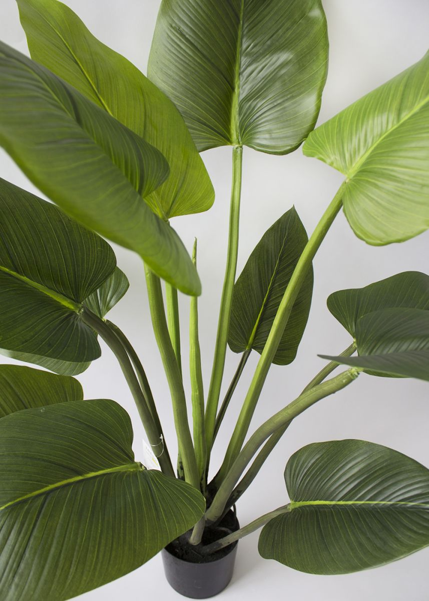Plante artifielle, curcuma 4\' - Décors Véronneau
