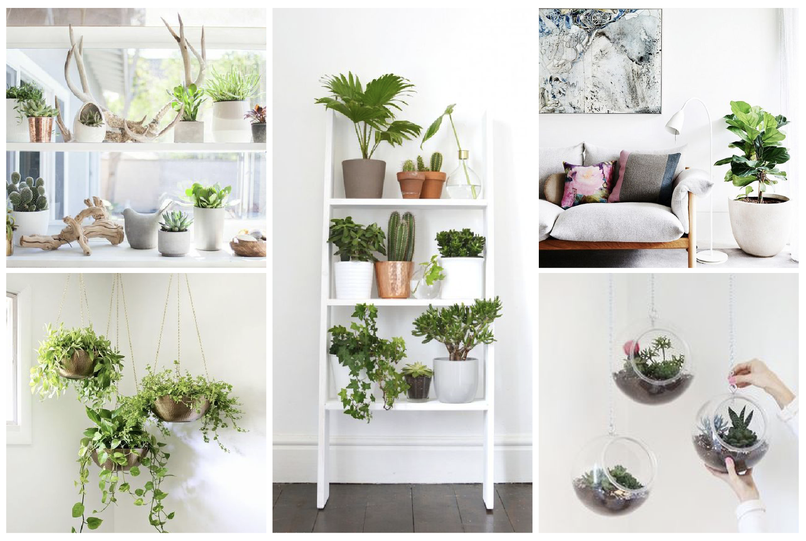 Superb plantes d interieur decoration 11 quand les for Plante design interieur