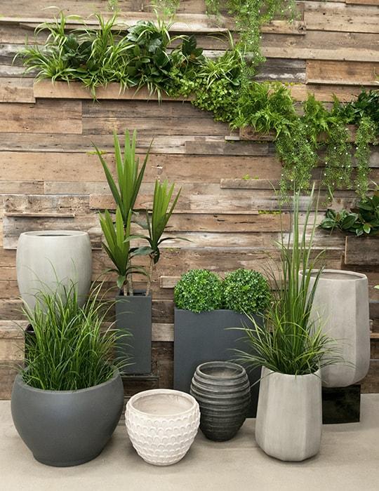 Arbre en pot exterieur great eucalyptus standard anti for Plante anti moustique exterieur