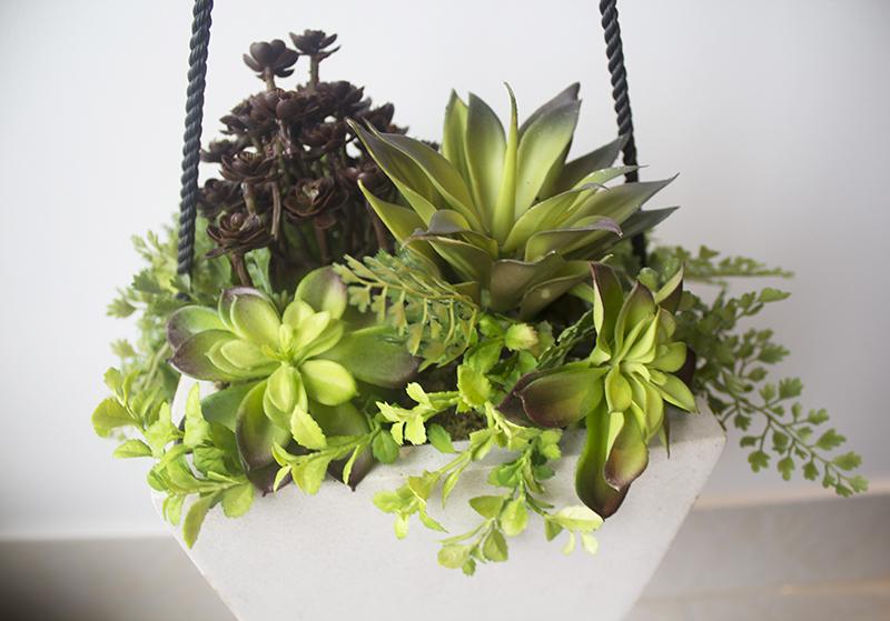 plante grasse suspendue