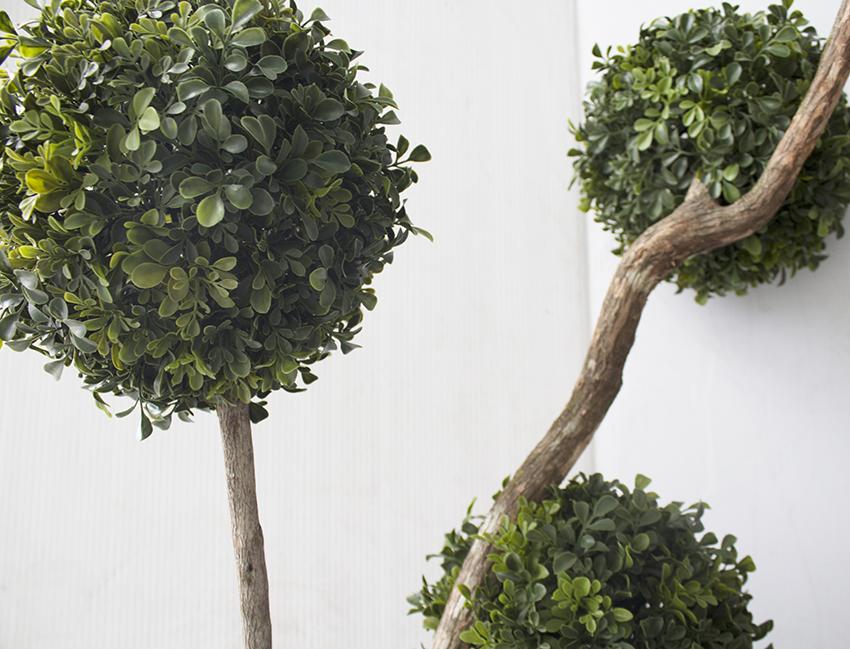 Arbre en pot exterieur gallery of mini cdre pin en pot with arbre en pot exterieur plante with - Arbre en pot ...