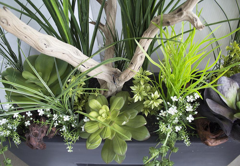 Bac moderne avec verdures plantes grasses et bois d cors v ronneau - Code avantage plantes et jardins ...