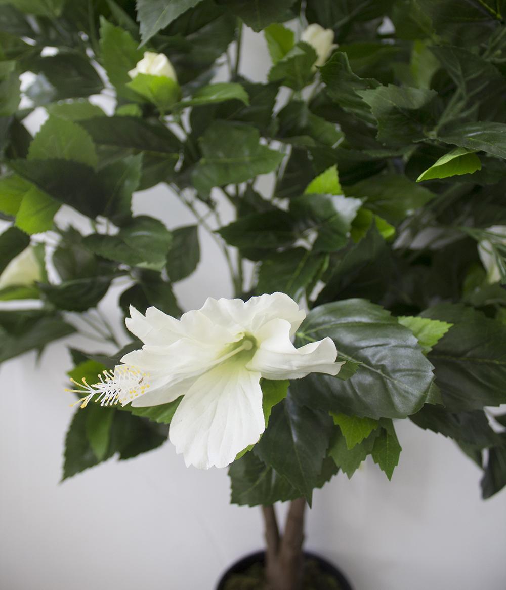 plant d 39 hibiscus blanc ext rieur 43 39 39 d cors v ronneau. Black Bedroom Furniture Sets. Home Design Ideas