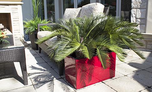 Presentoir plantes exterieur maison design for Plante odorante exterieur